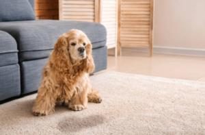 Dog standing beside odor pee