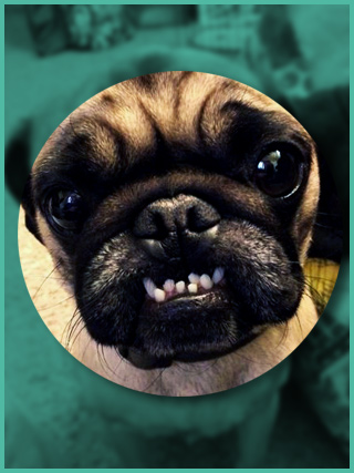 Small dog with teeth