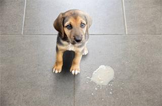 White dog diarrhea