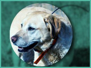 Dog tracker around neck