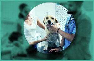 Dog at veterinary